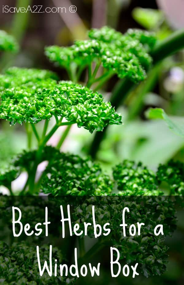 Best Herbs For A Window Box Isavea2z Com