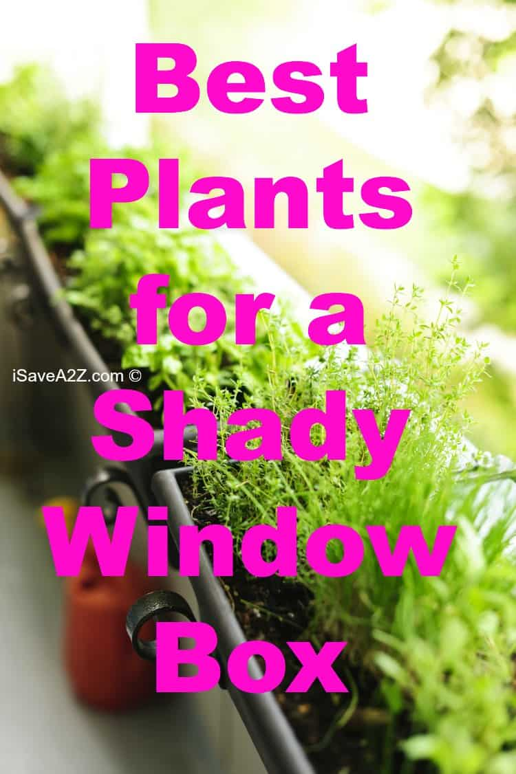 best plants for a shady window box  isaveaz, Natural flower