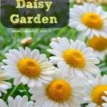 Designing a Daisy Garden