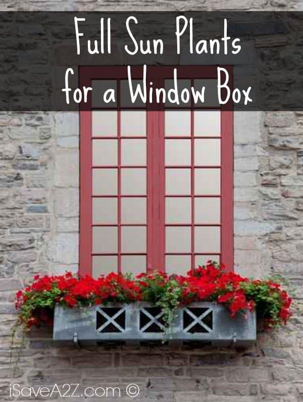 Window Box Designs For Full Sun