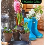 Planting a Spring Bulb Window Box
