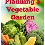 Basic Steps to Planning a Vegetable Garden