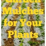 Best Garden Mulch for Your Plants
