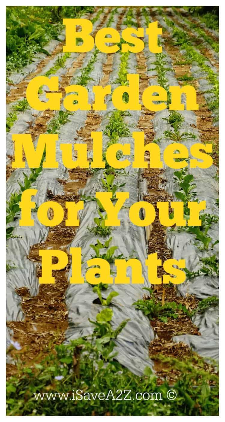 Best garden mulch for your plants for Best garden plants