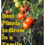 Best Plants to Grow in a Family Garden
