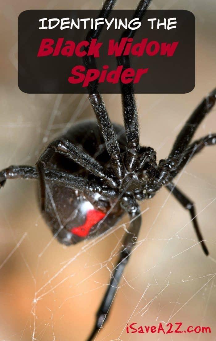 spider essay