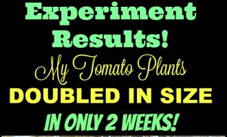 Here's a Hack for Watering Tomato plants!